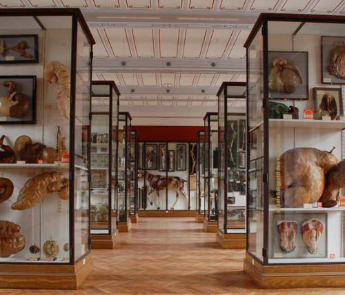 Museo Fragonard