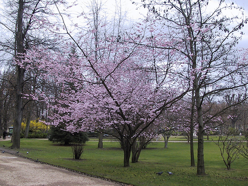 Jardin de Ranelagh